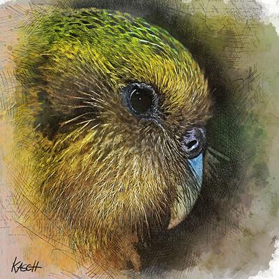 Karsten schneider kakapo digitalpaint