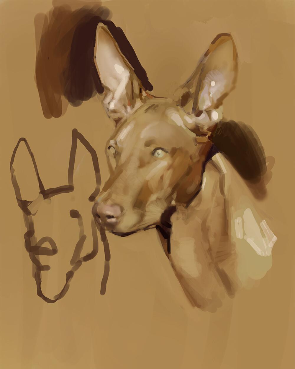 Devin korwin dog