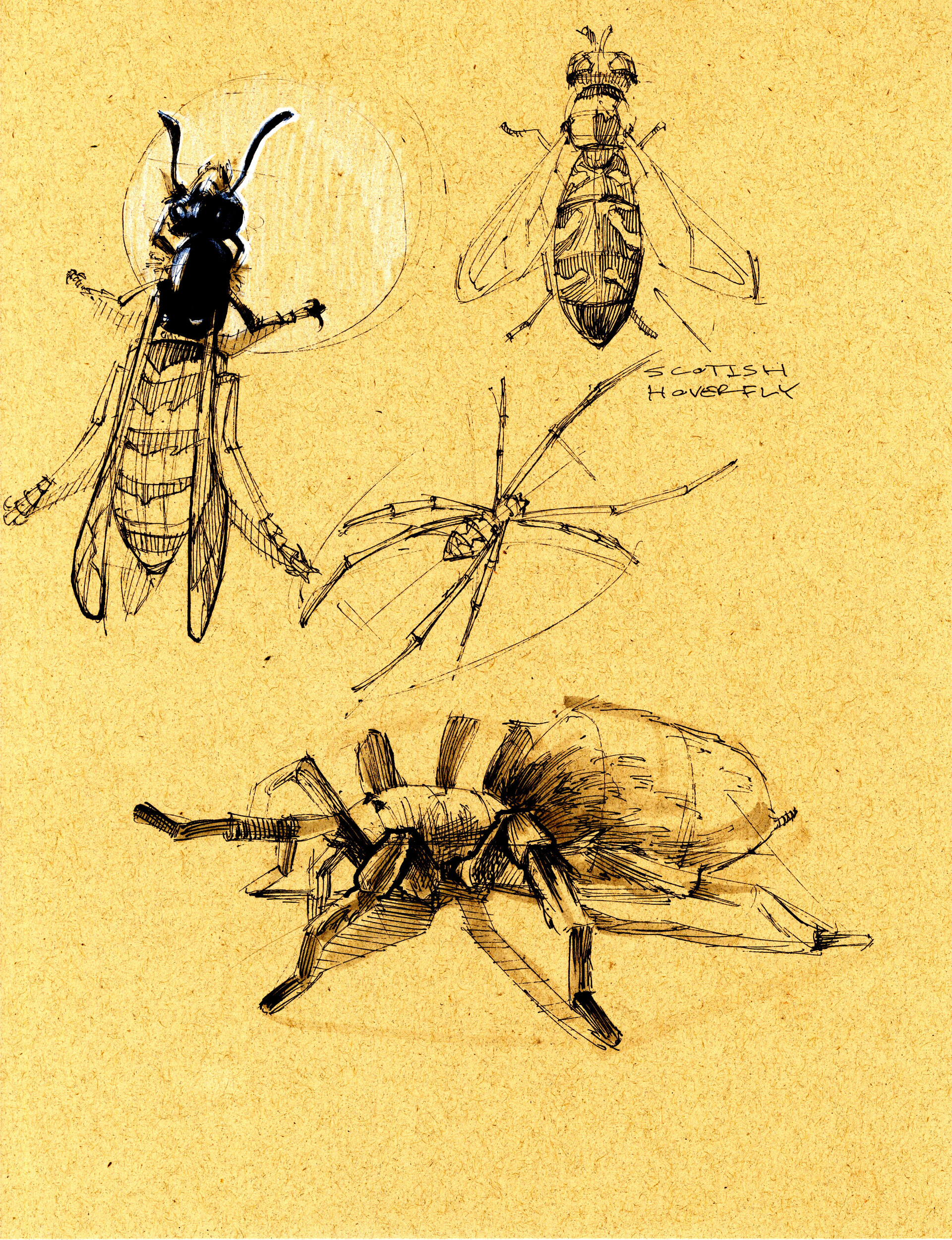 Drake truber arachnid8