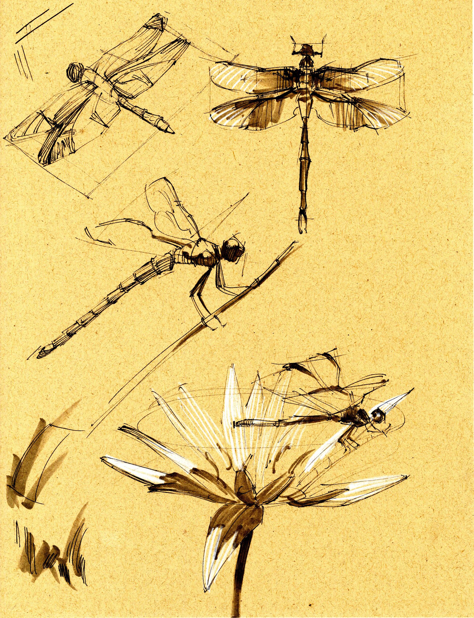 Drake truber dragonfly3