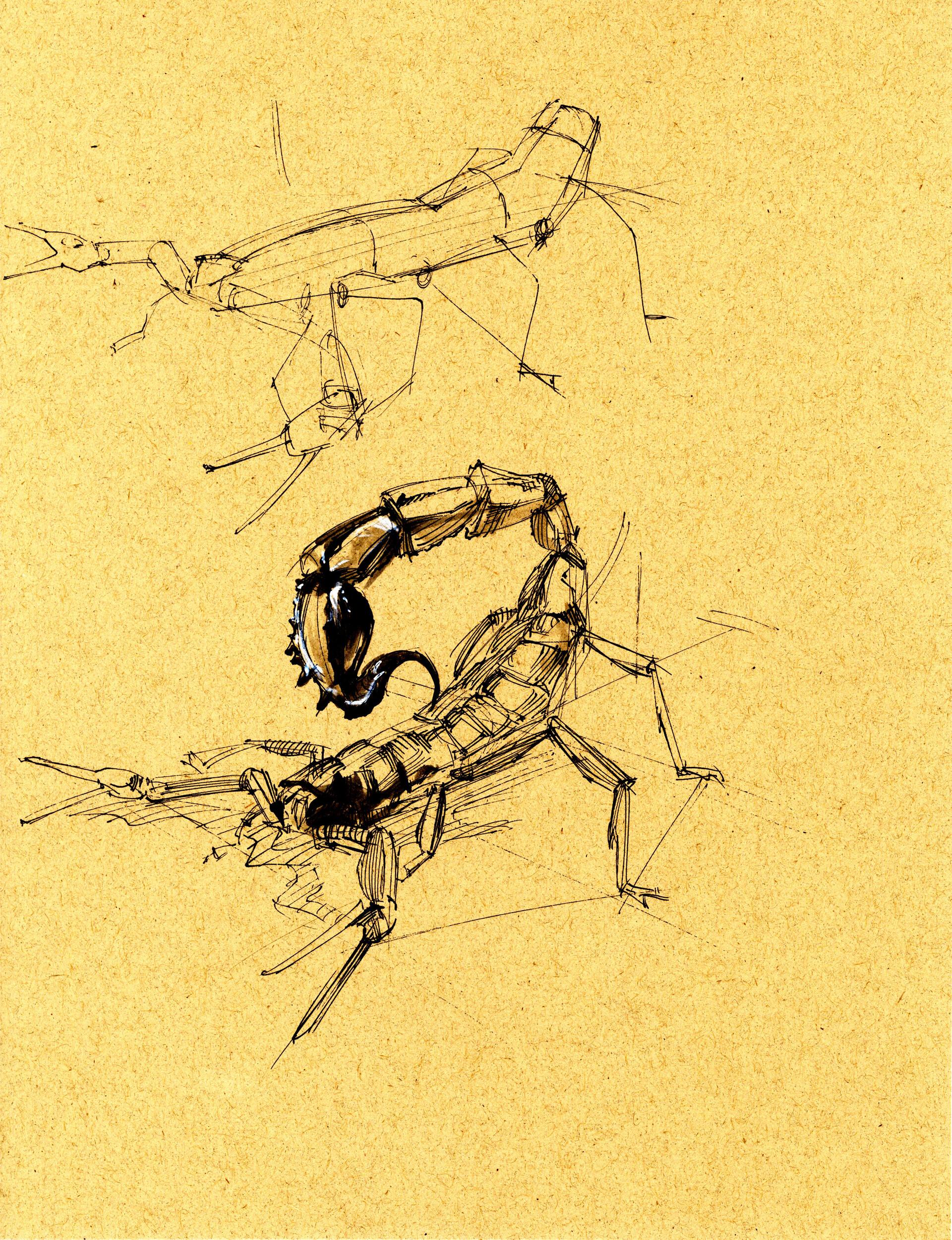 Drake truber arachnid7