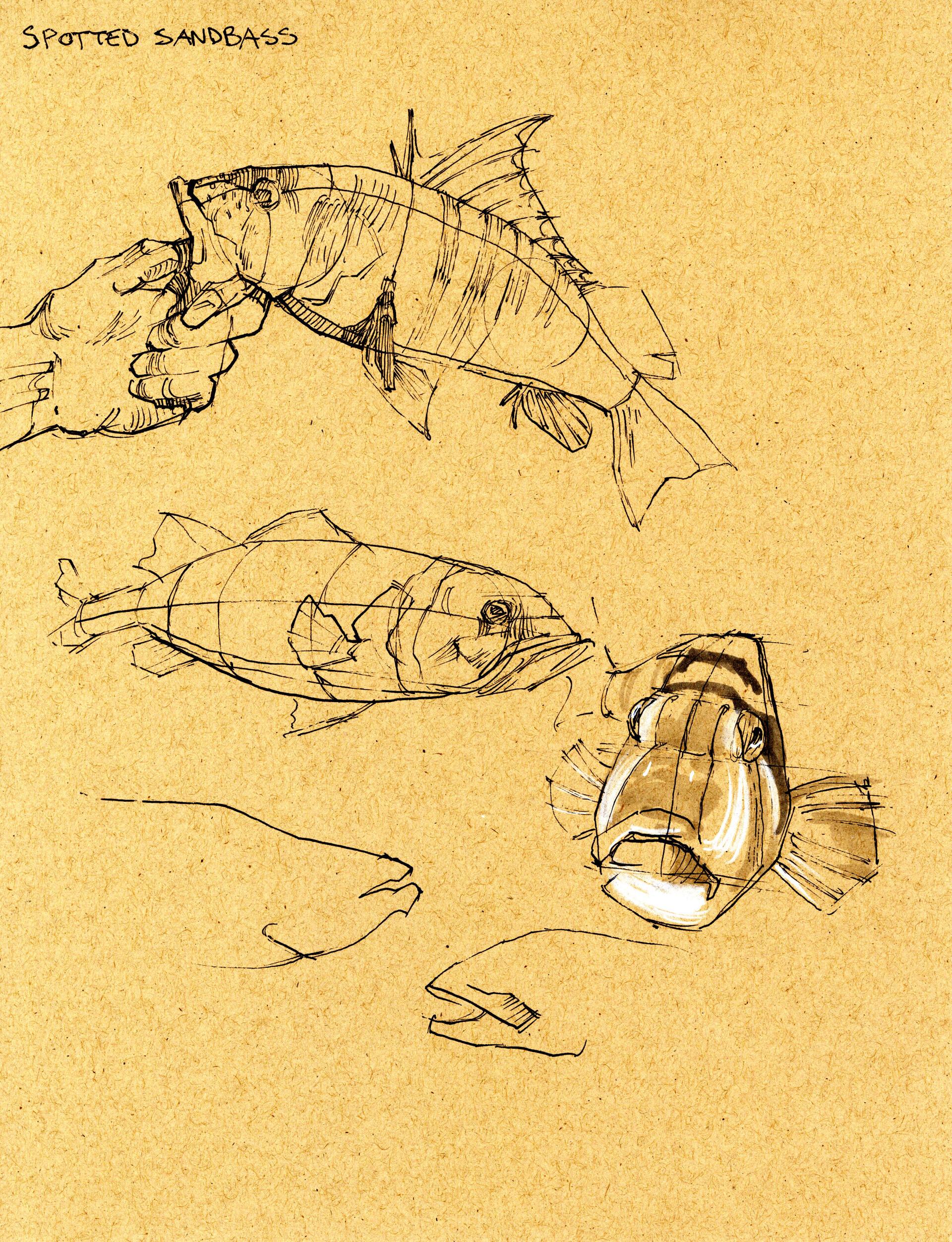 Drake truber fish4