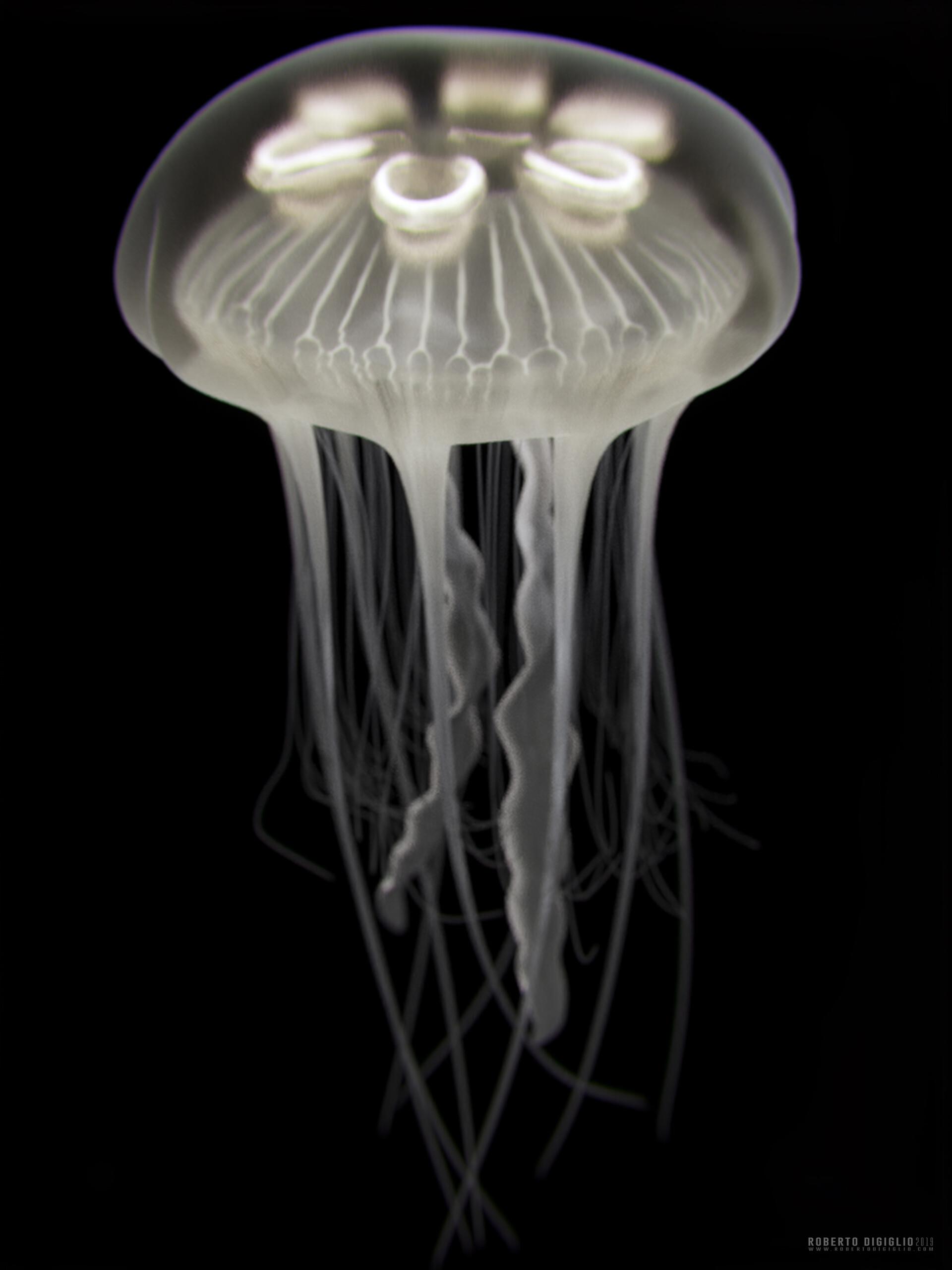 Roberto digiglio jellyfish2