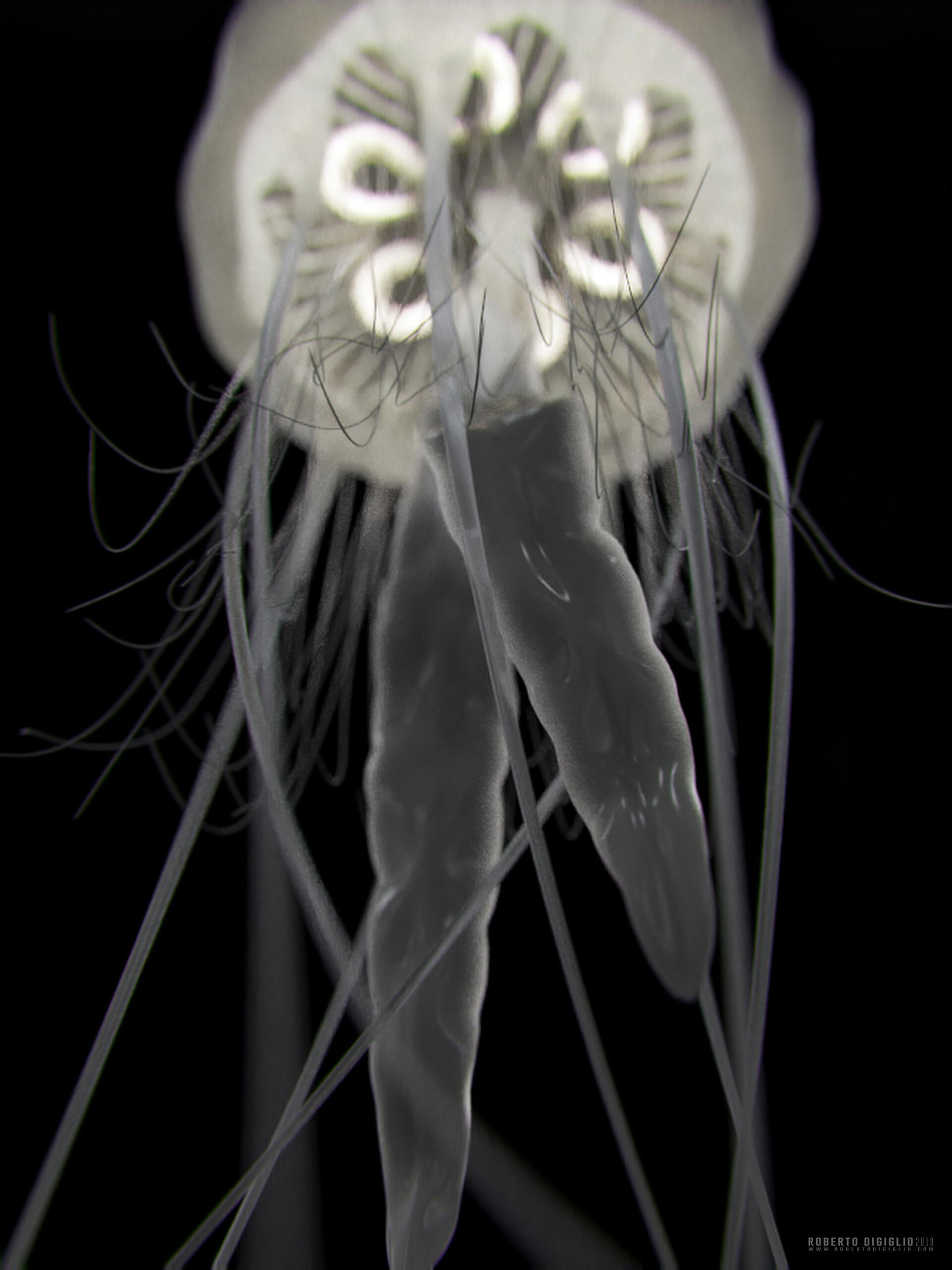 Roberto digiglio jellyfish5