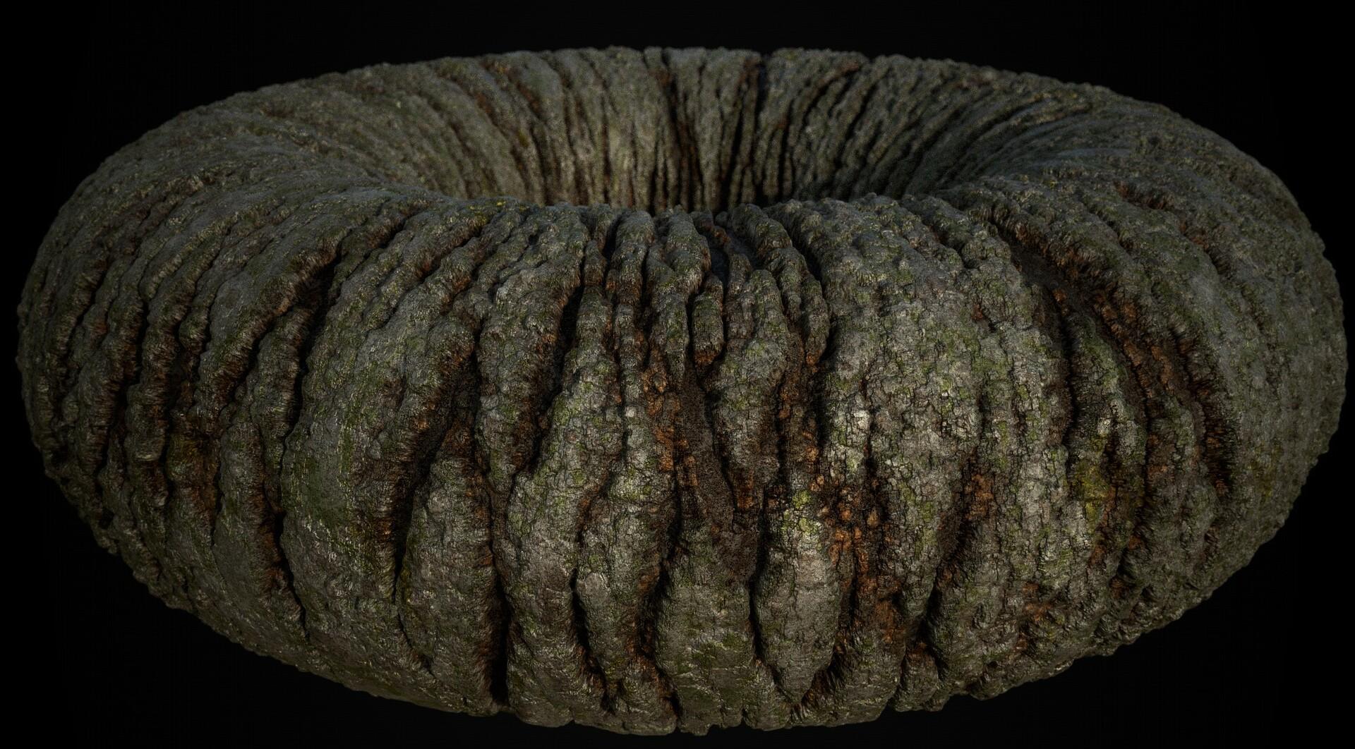 Marcelo souza bark 01 01 torus