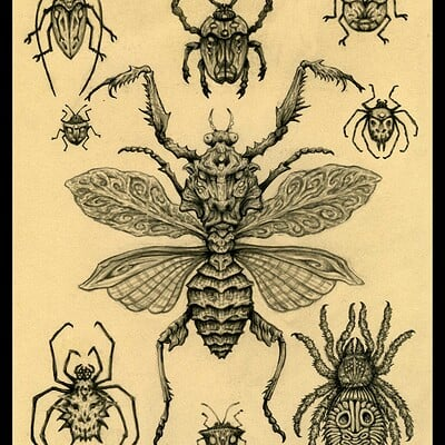 Patrick weck insect collection webgrade