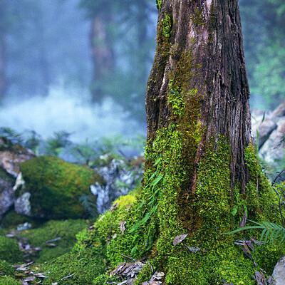 Jeremy heintz rainforest02