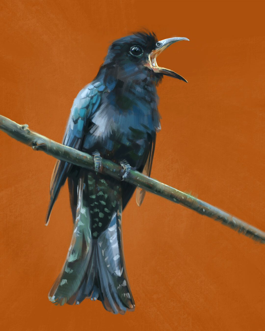 The call of the Square-tailed drongo-cuckoo (Surniculus lugubris)