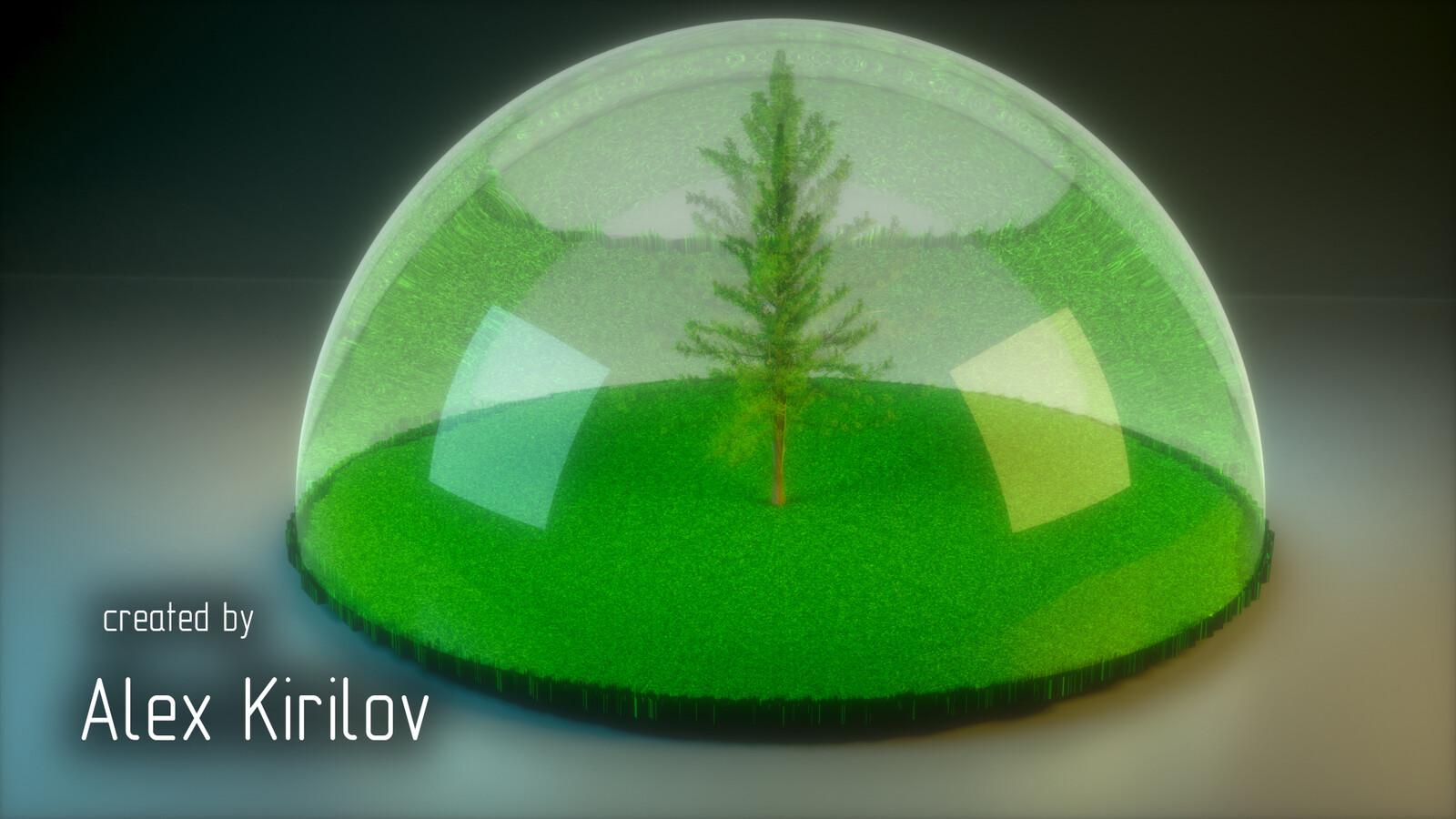 My spruce...