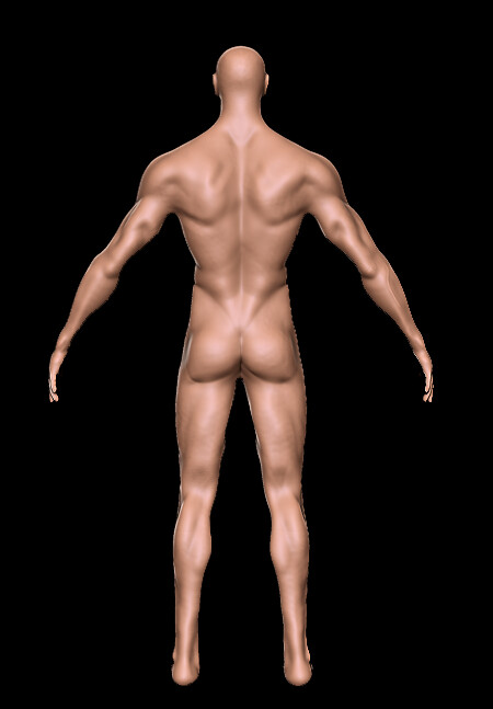 Kat townsend anatomyback