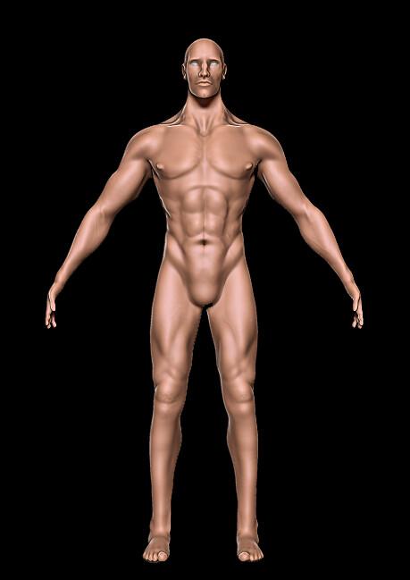 Kat townsend anatomyfront