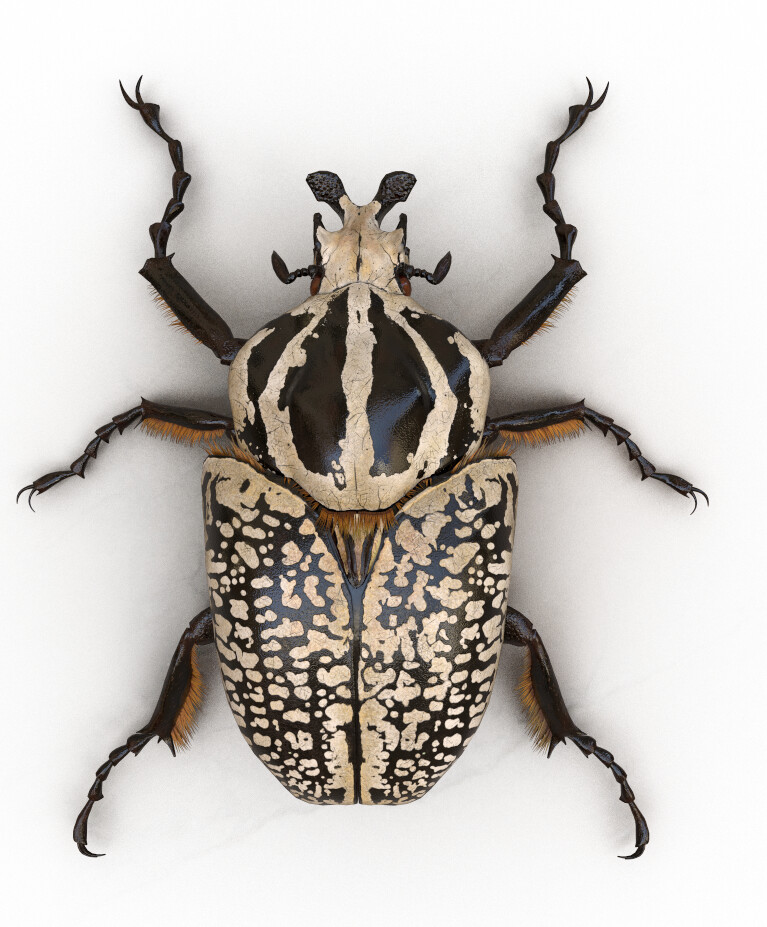 Goliath beetle rendered in Substance iRay
