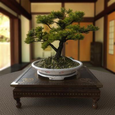 Federico zimbaldi japan bonsai 969