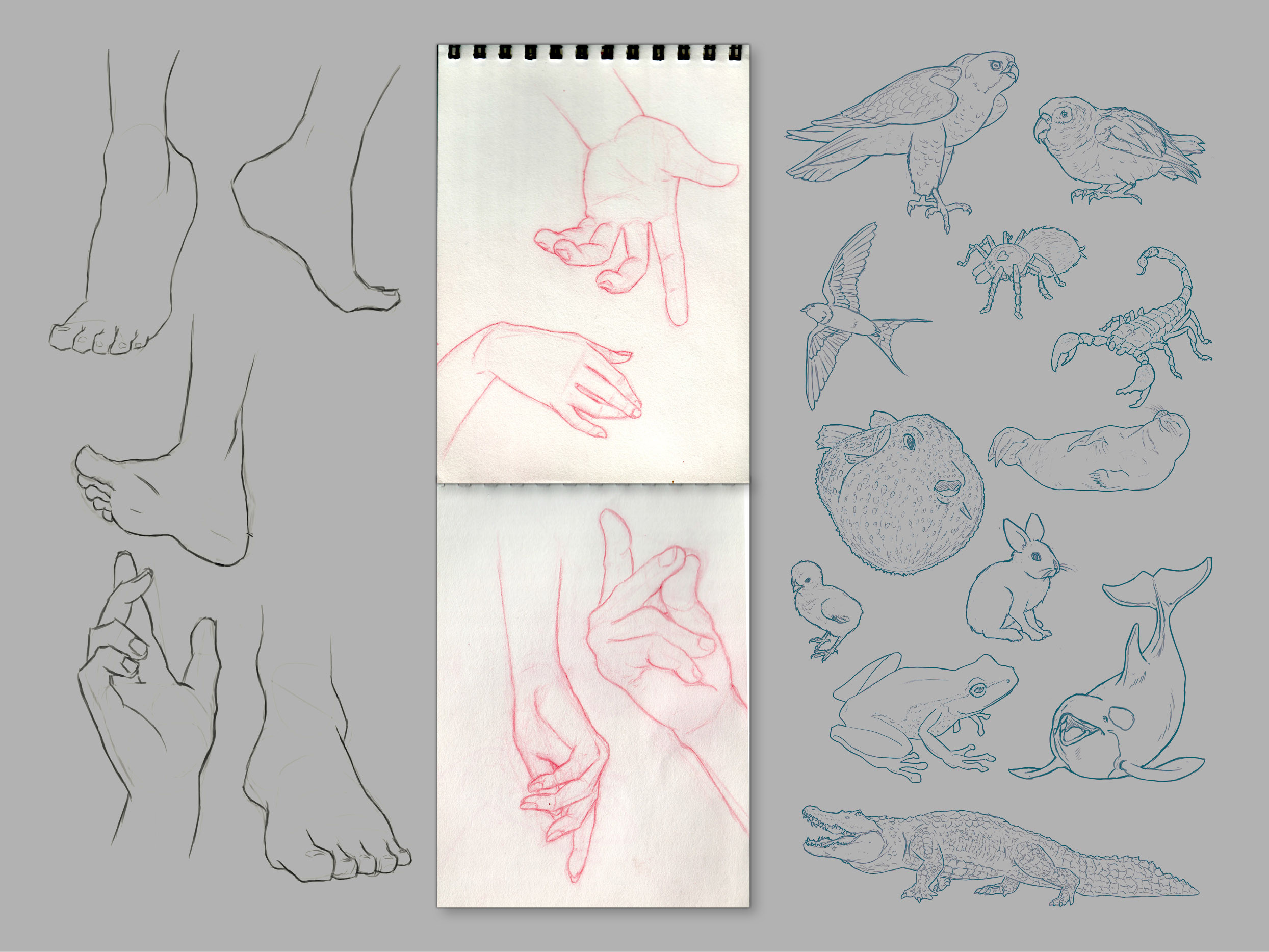 Hands, feet and animals study.