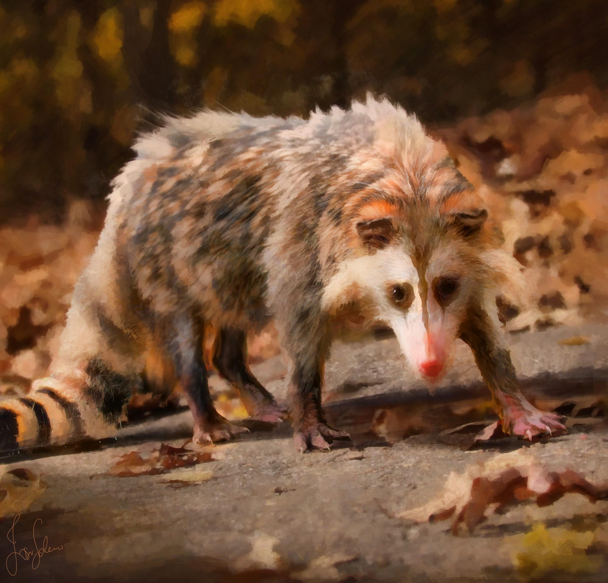 Racoossum