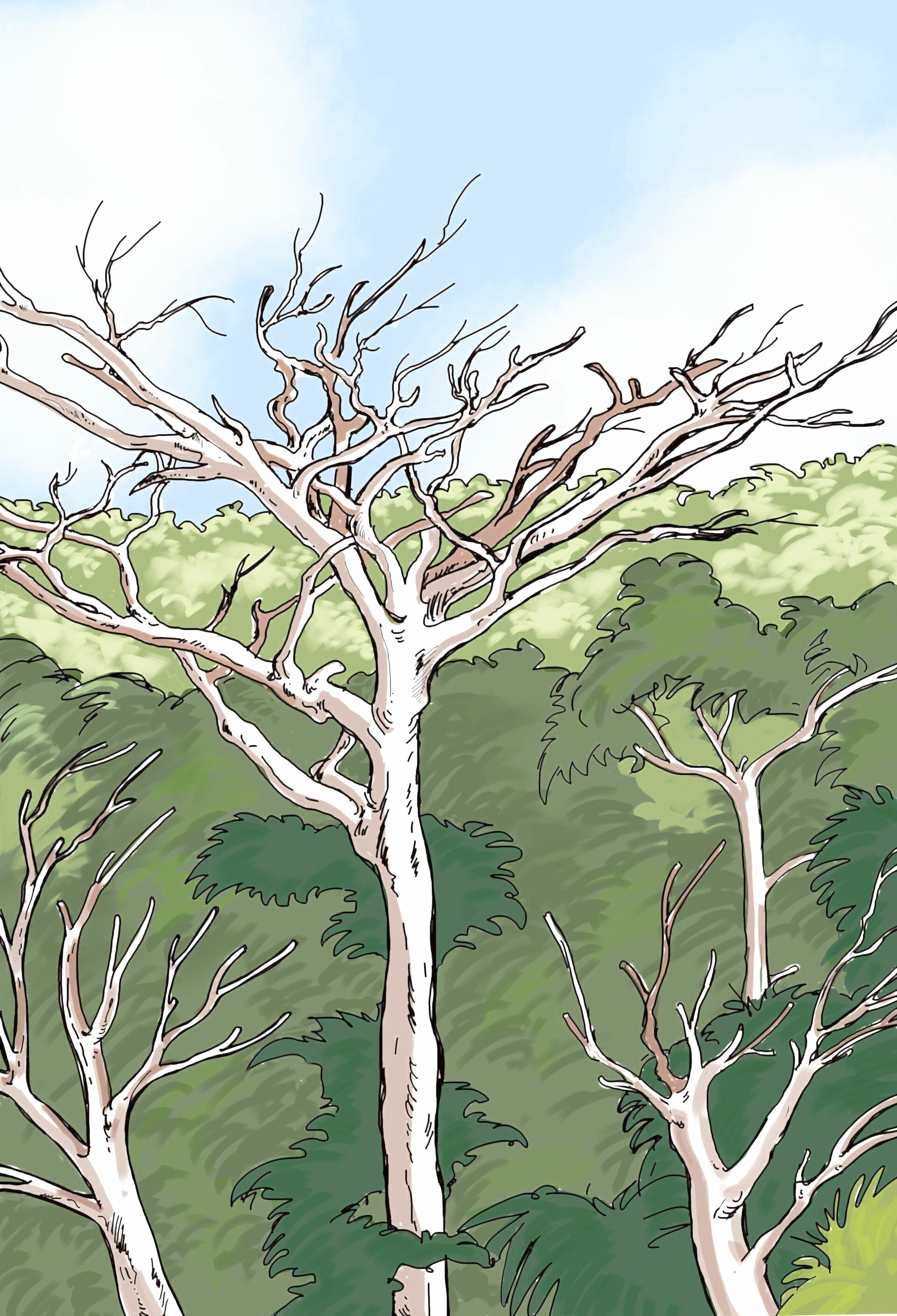 Jungle back ground  drawing created with Sketchbook Pro.