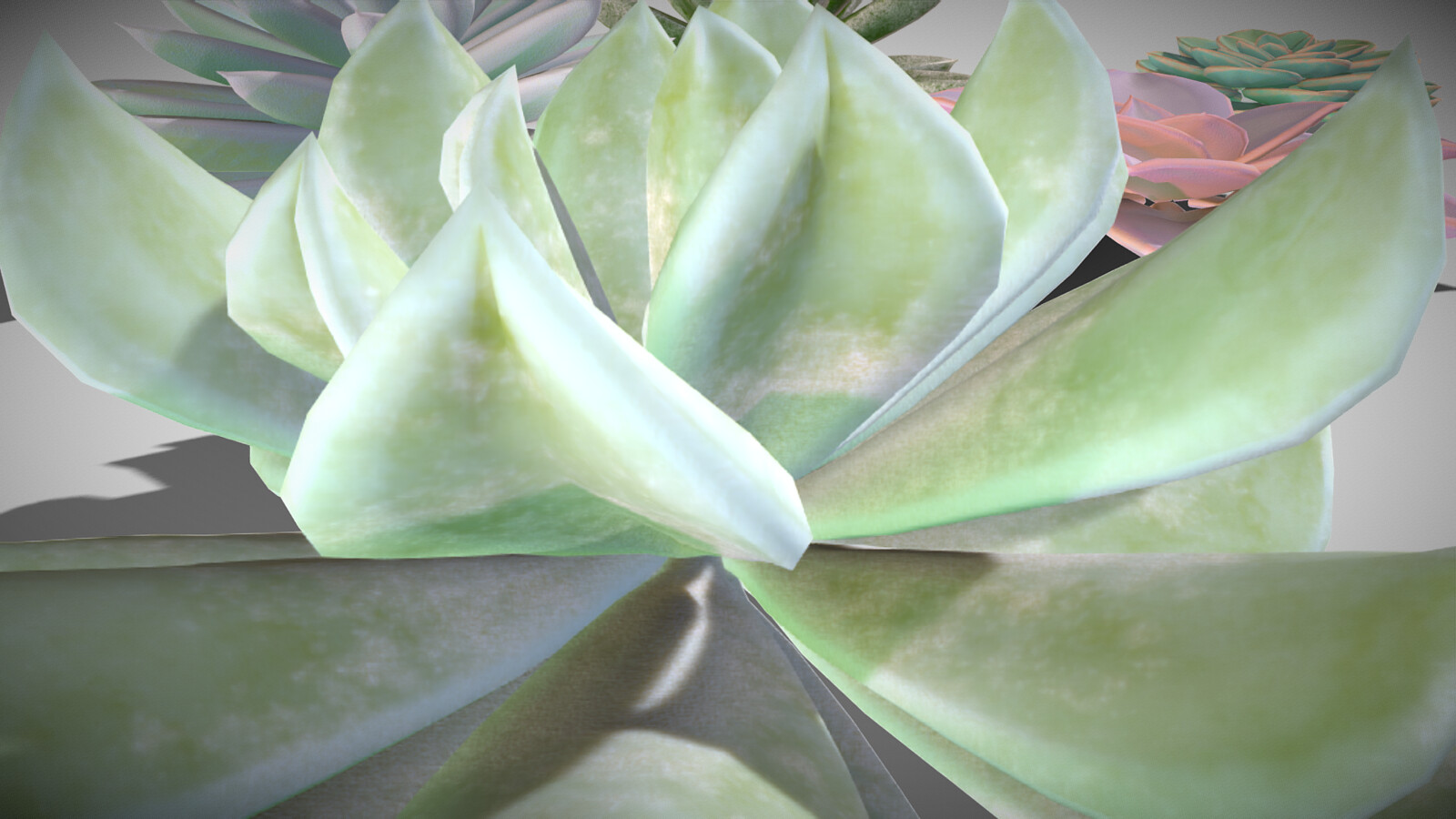 Succulents - Detail
