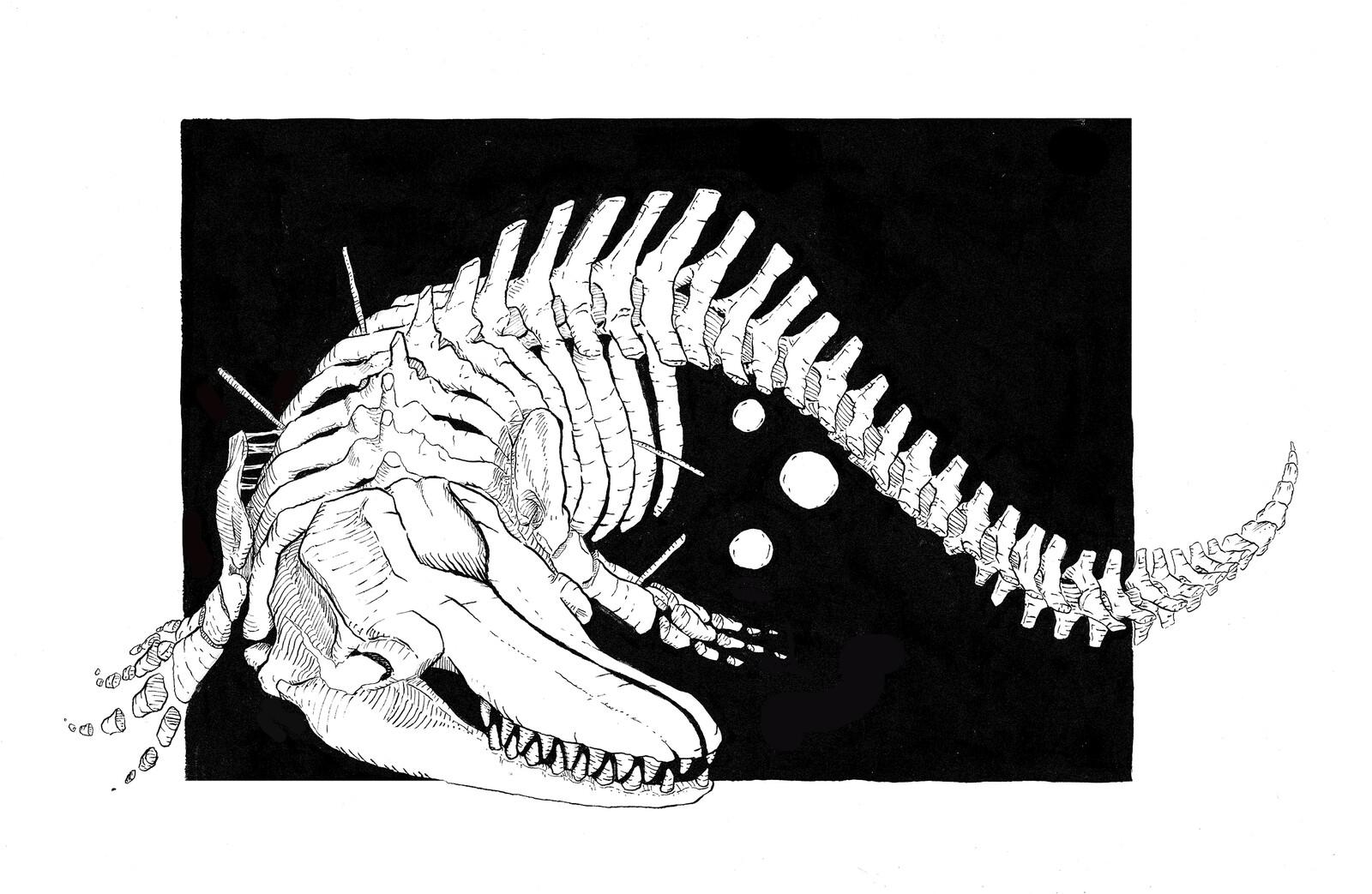 Skeleton Whale