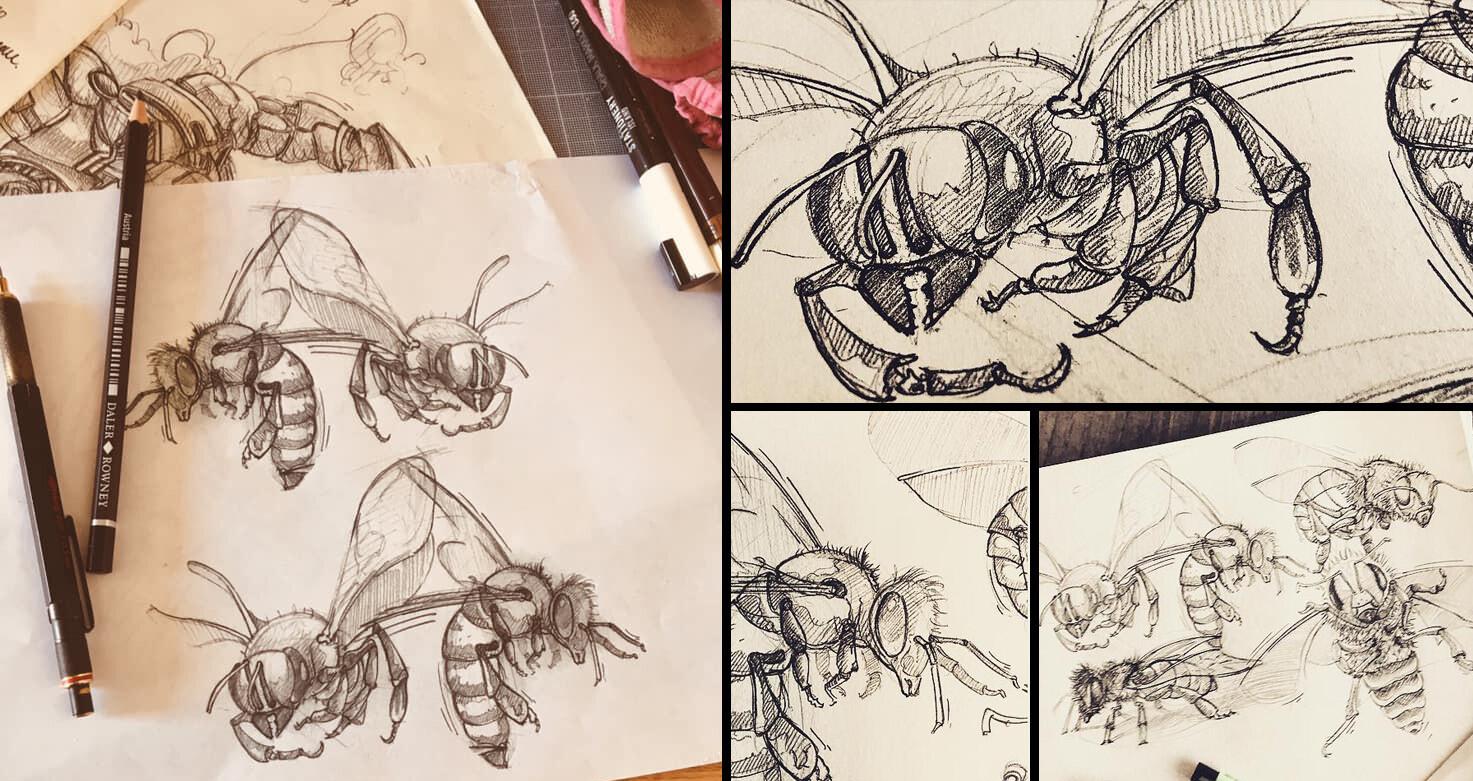 Animal Sketchs