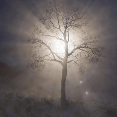 03 lonely tree