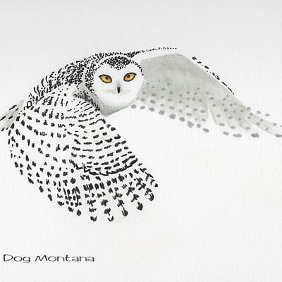 Julian weiler snowy owl