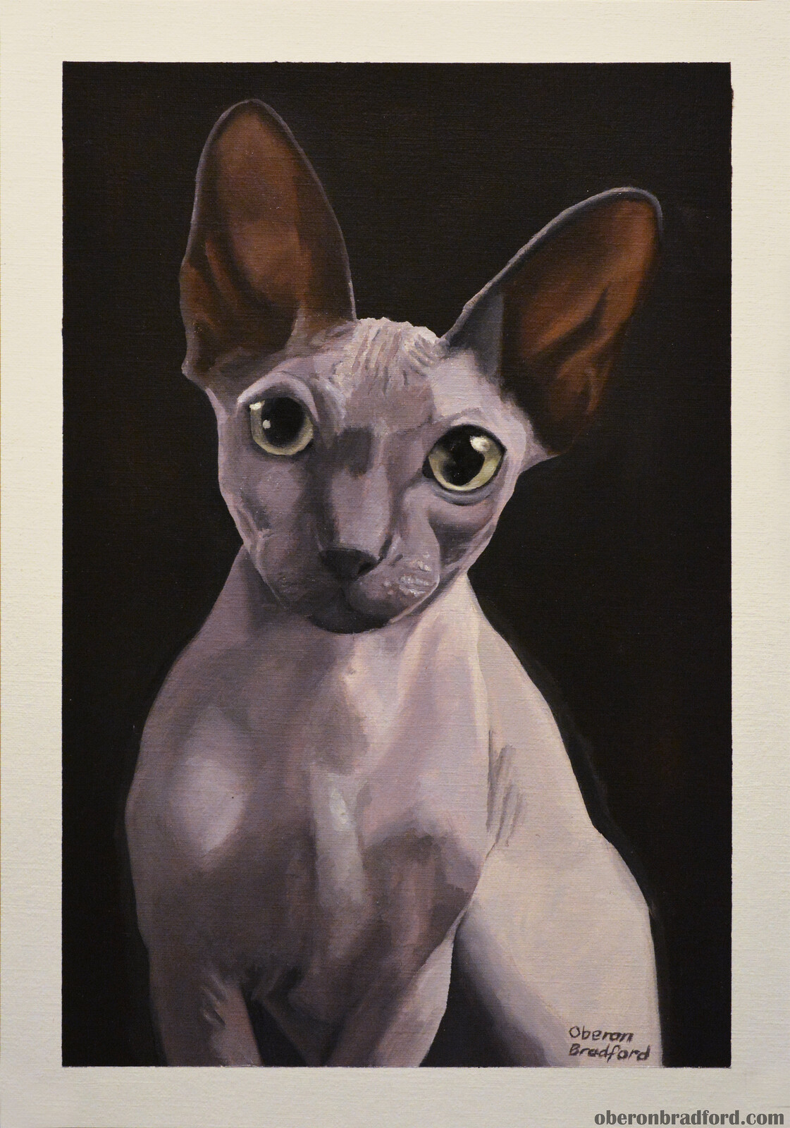 Sphynx Portrait