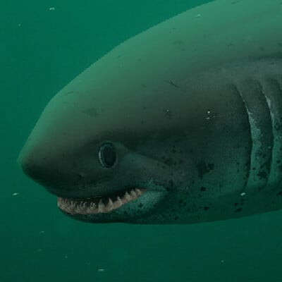 Frederic wierum animals salmon shark sq3