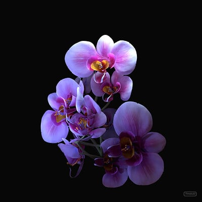 Tyler smith orchidstudy01