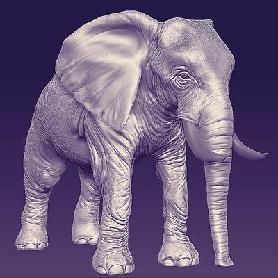 Priya johal elephant 2
