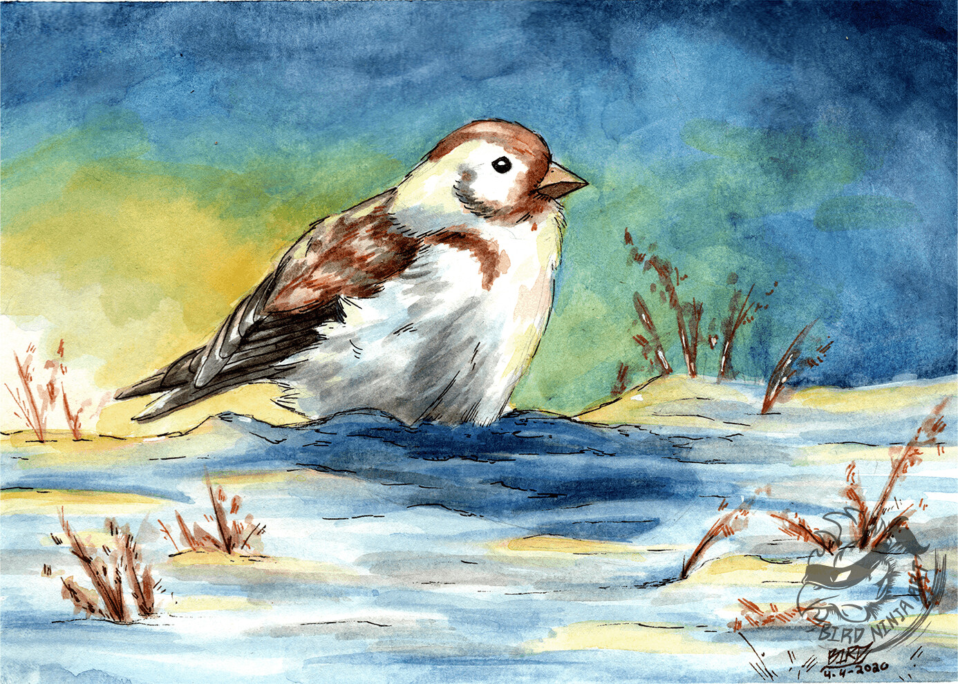 Final Illustration of a Snow Bunting