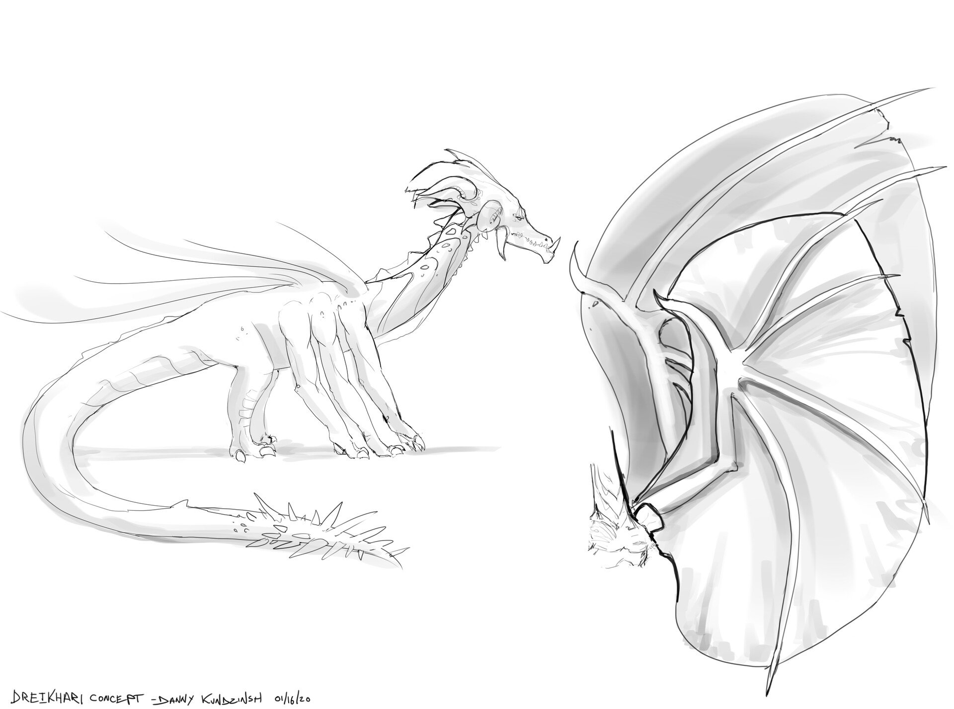 Side view and wing studies