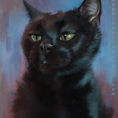 Jon hopkins cat pet portrait jon hopkins art