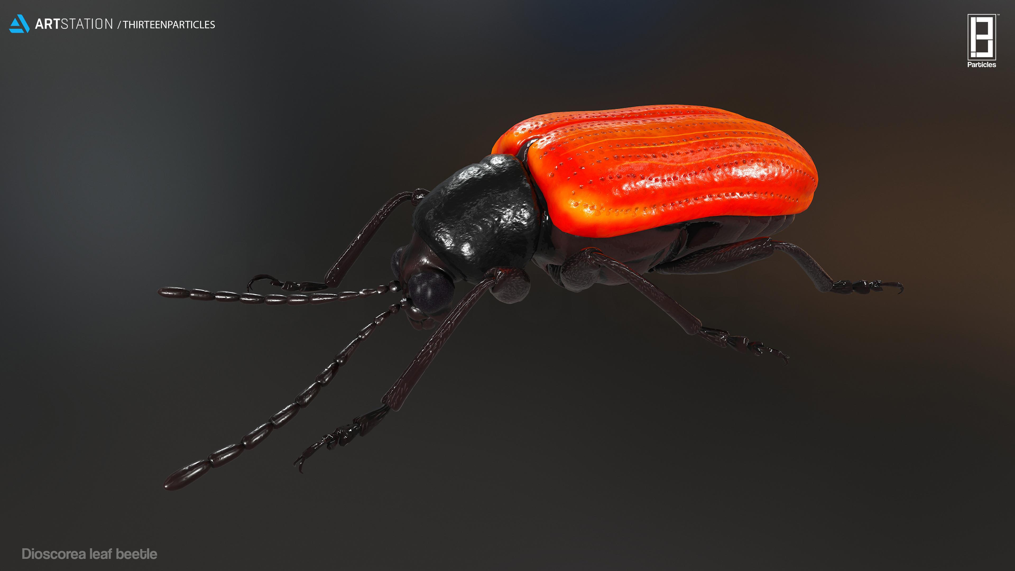 Dioscorea leaf beetle