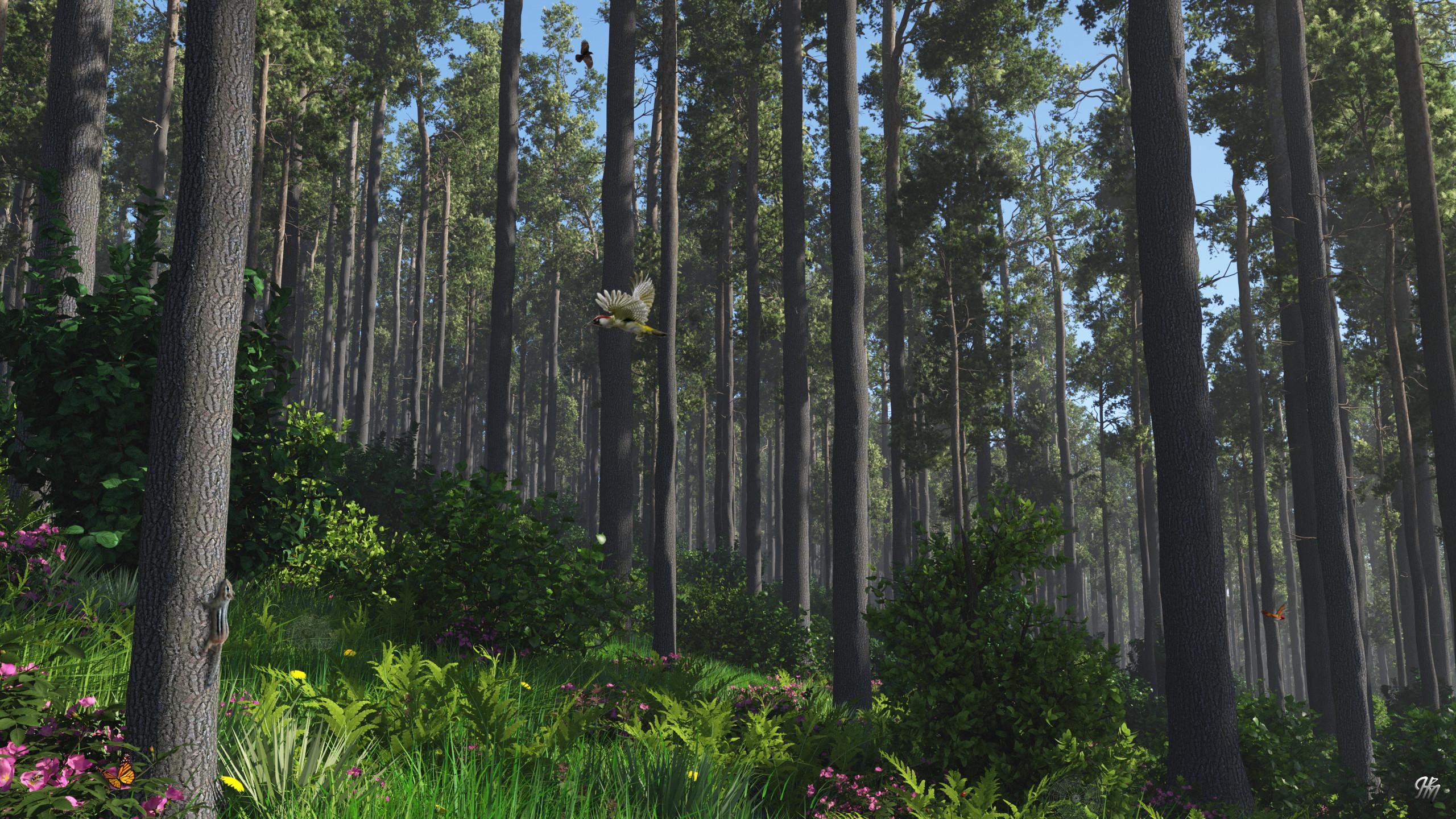 Woodland Harmony TG20191128