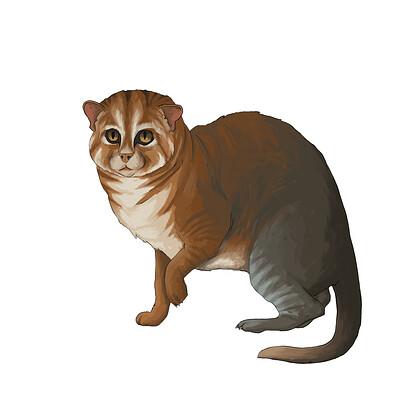 David markiwsky flatheadedcat