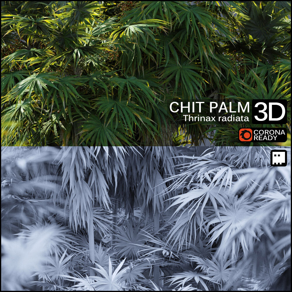Chit Palm Asset Collection