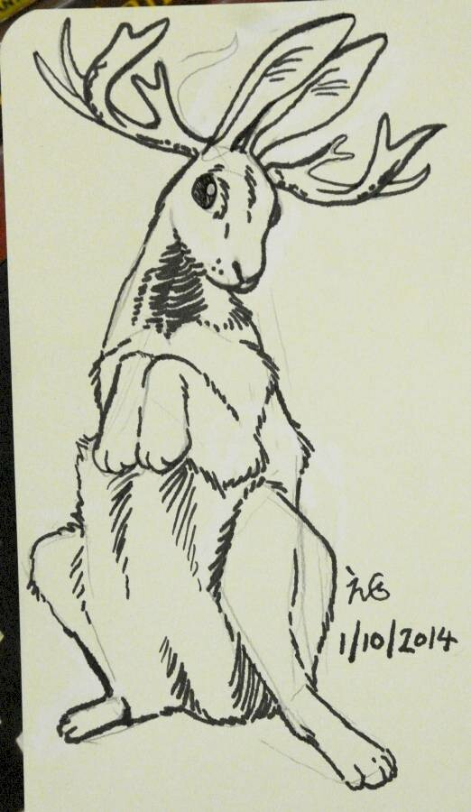 """I like """"Jackalope"""" by Shonen Knife, so I looked up what this animal looks like for real. (It doesn't look much like this!)"""