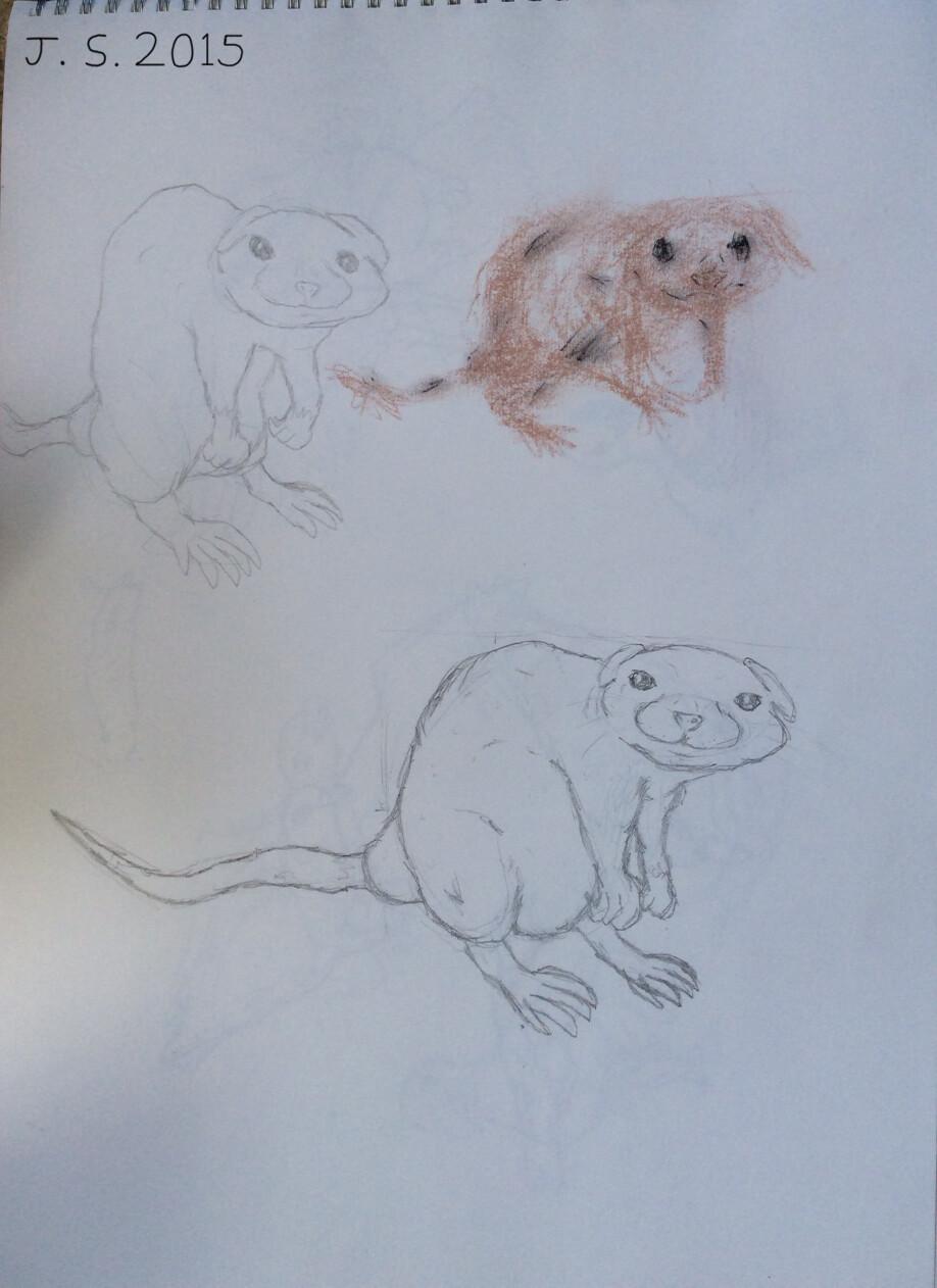 Crouching Rat