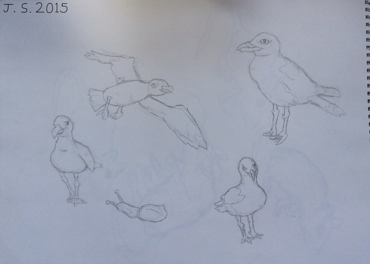 Seagulls and Snail