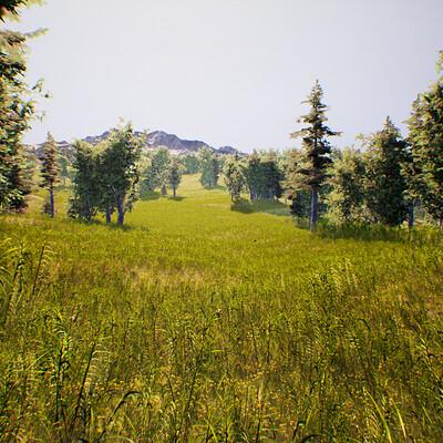 Open Forest Landscape