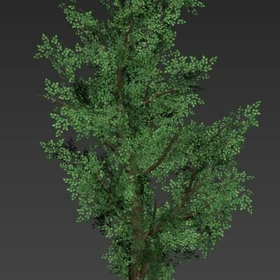 Alex jones tree1pic1