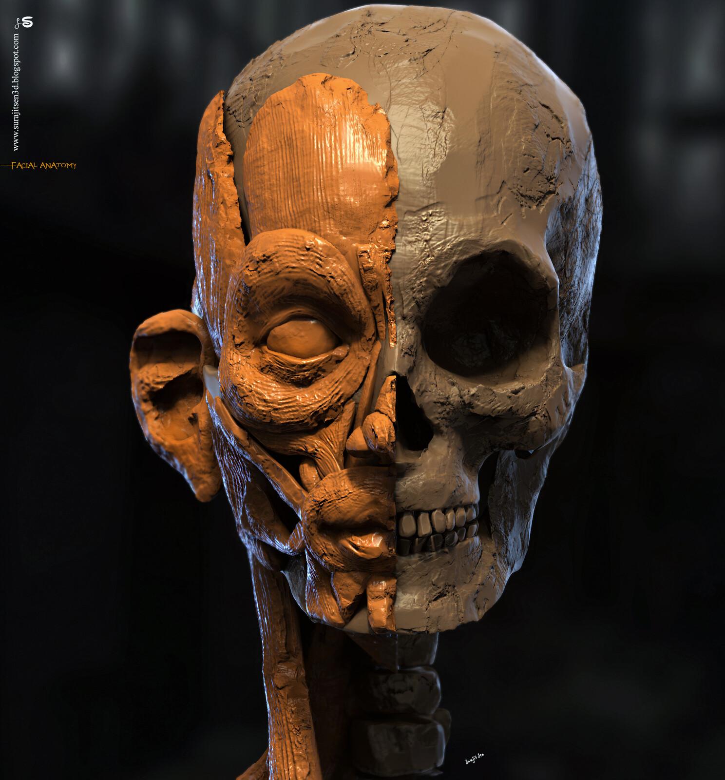 Human Facial Anatomy Digital Sculpture Basic Blocking My weekend study work. Background music- #hanszimmermusic