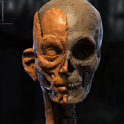 Surajit sen human facial anatomy digital sculpture by surajitsen jul2020a