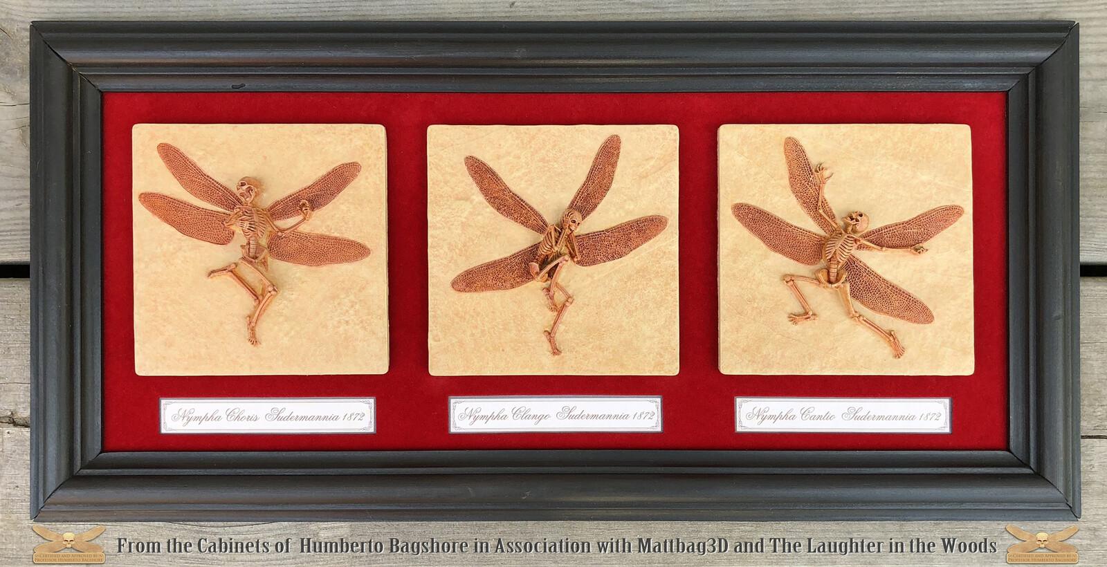 Framed Fossils for display
