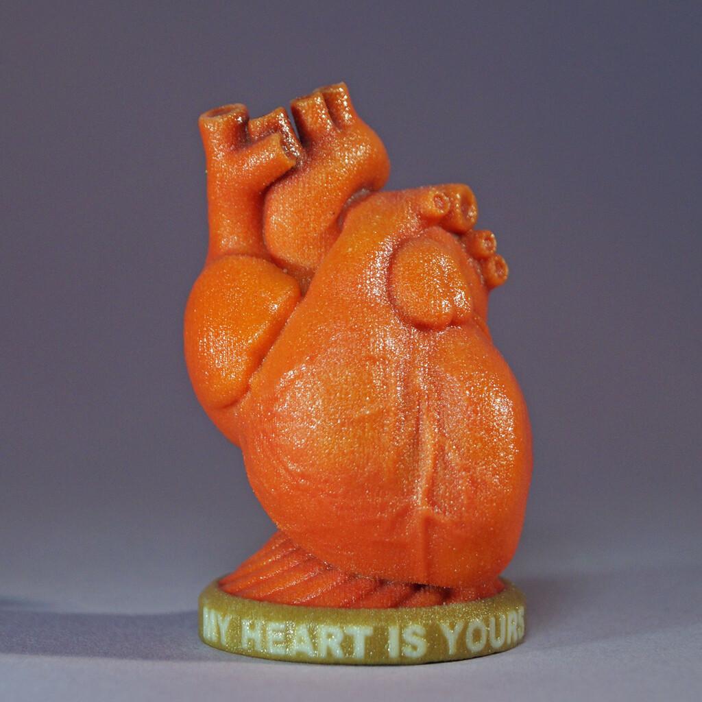 Anatomical Heart Token