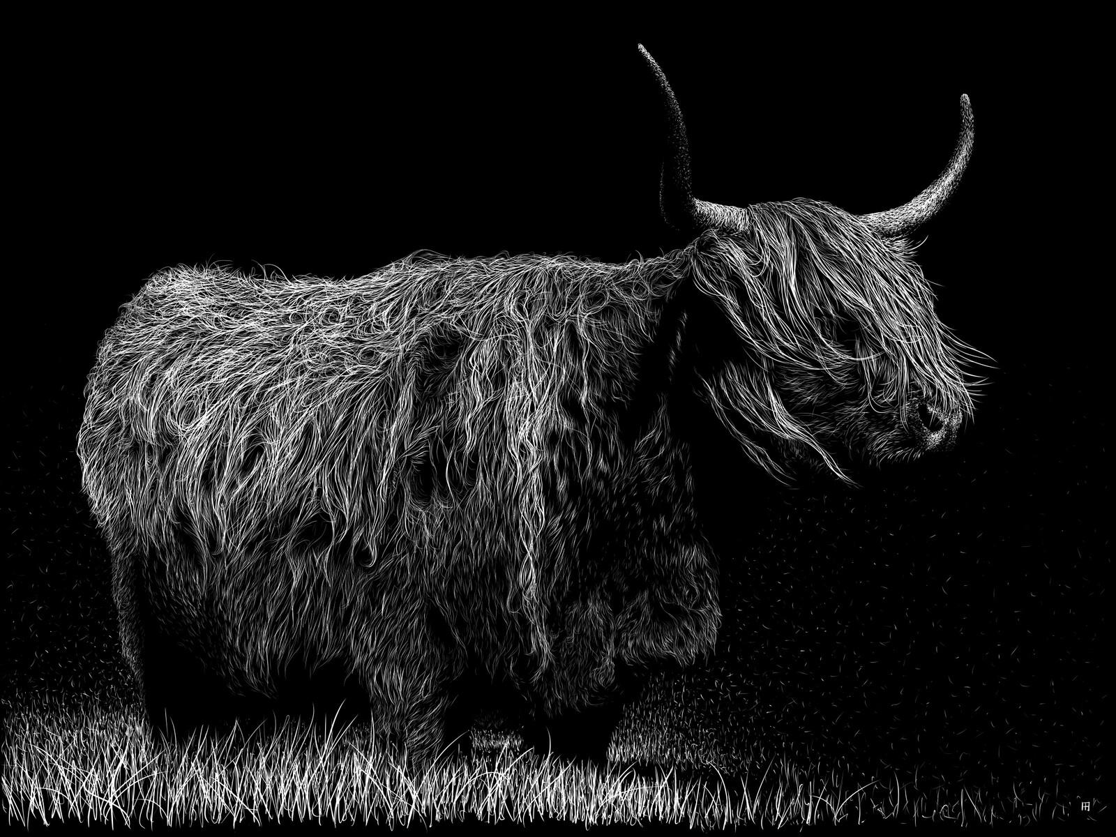bovidae