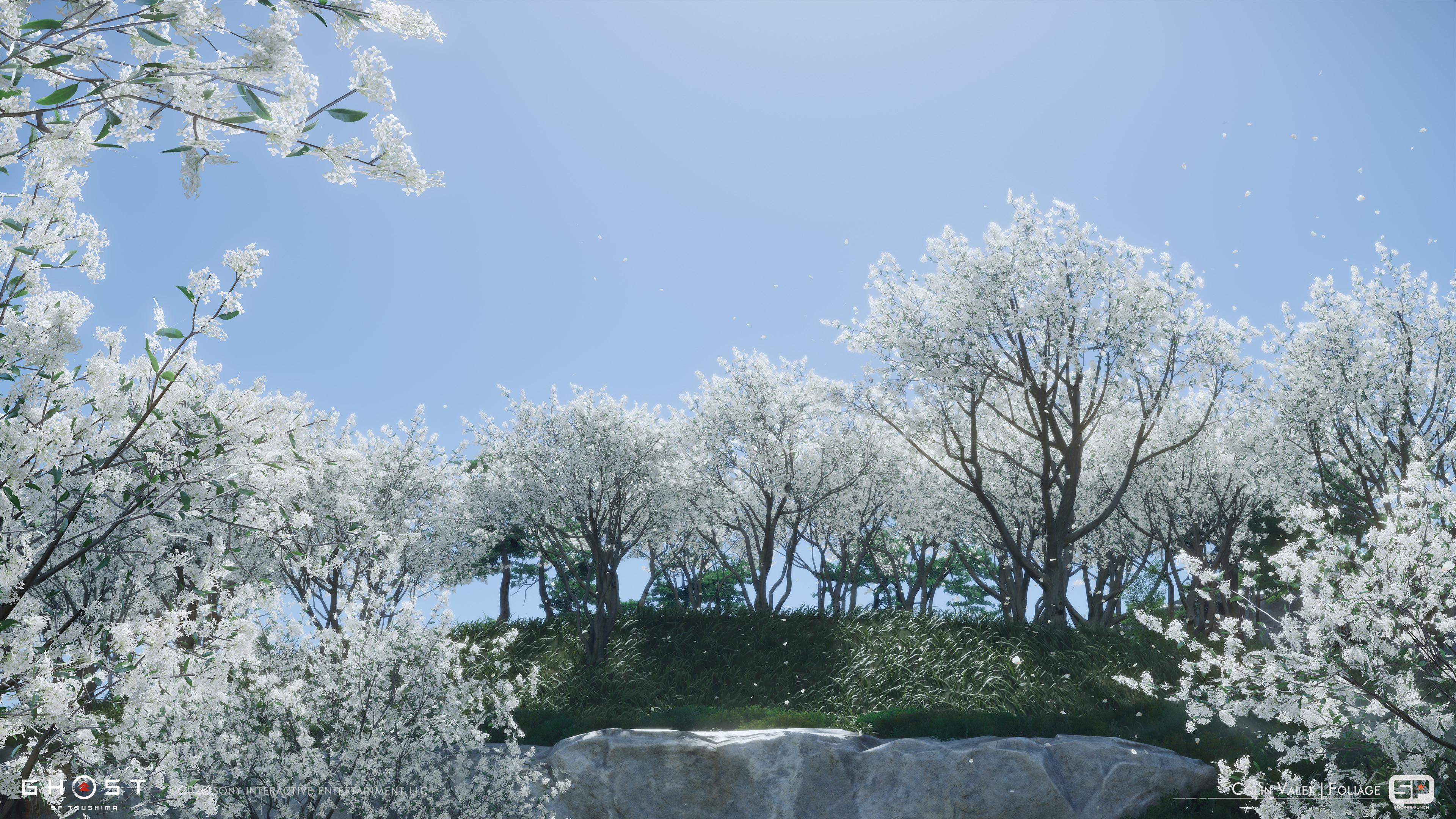 Osmanthus trees