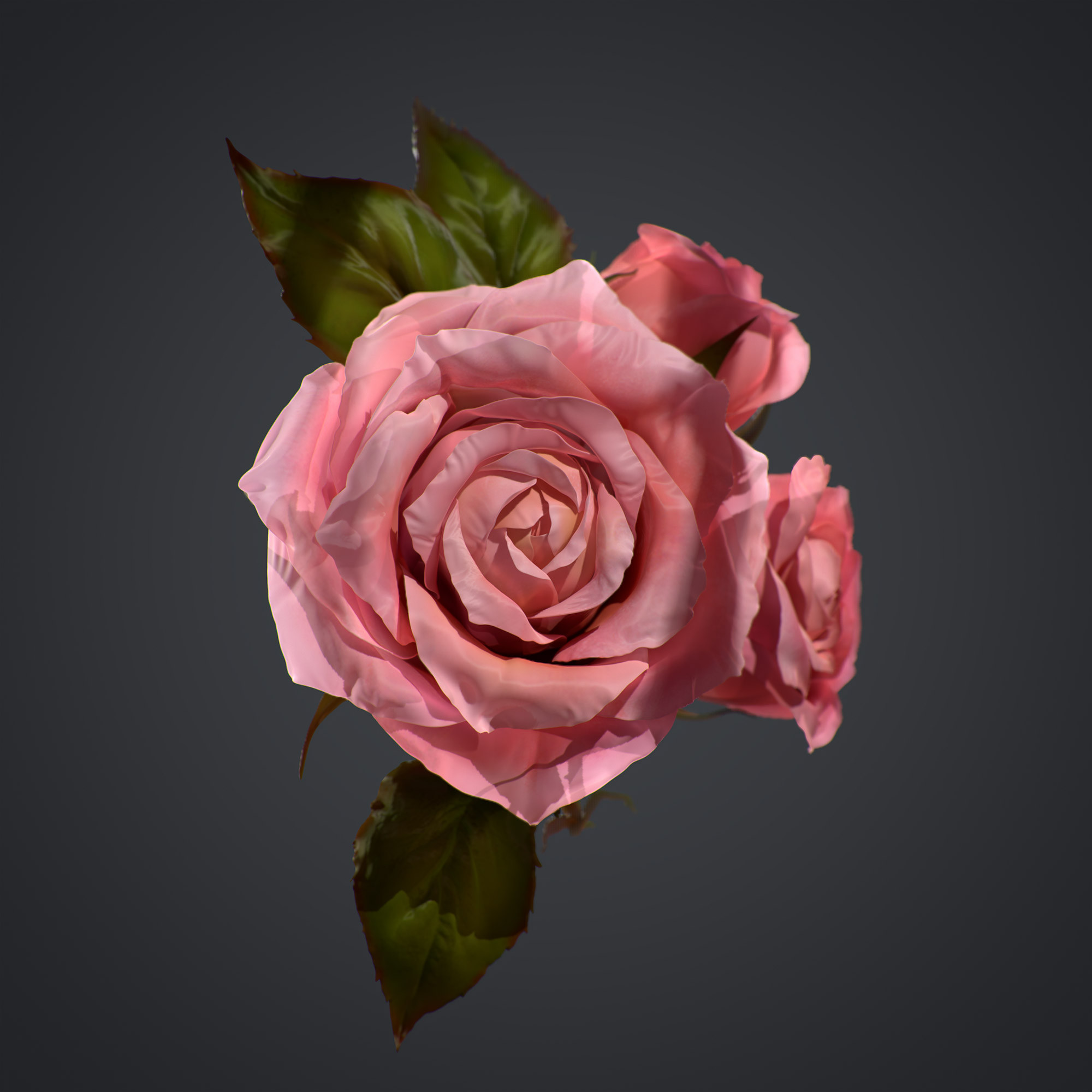 Rose - a study created to test Zbrush 2021's cloth brushes, rendered in Marmoset Toolbag 3
