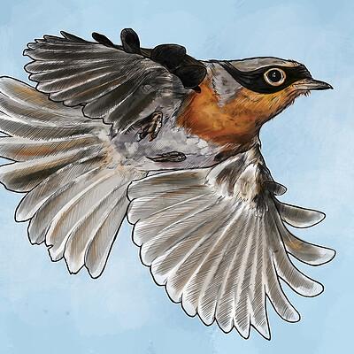 Graham moogk soulis robin coloured