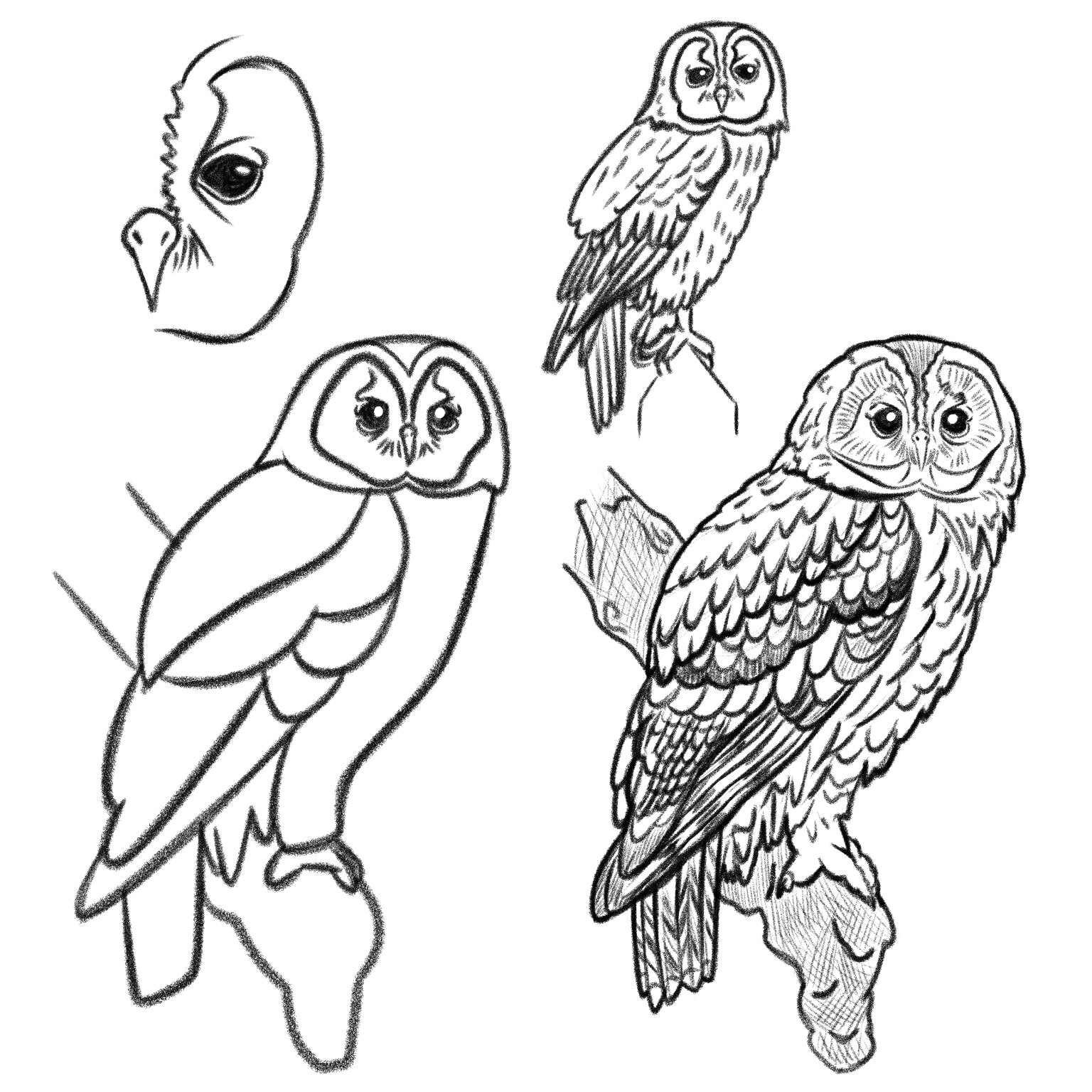 The progression of Tawny Owl studies that served as a warm up to the final piece.